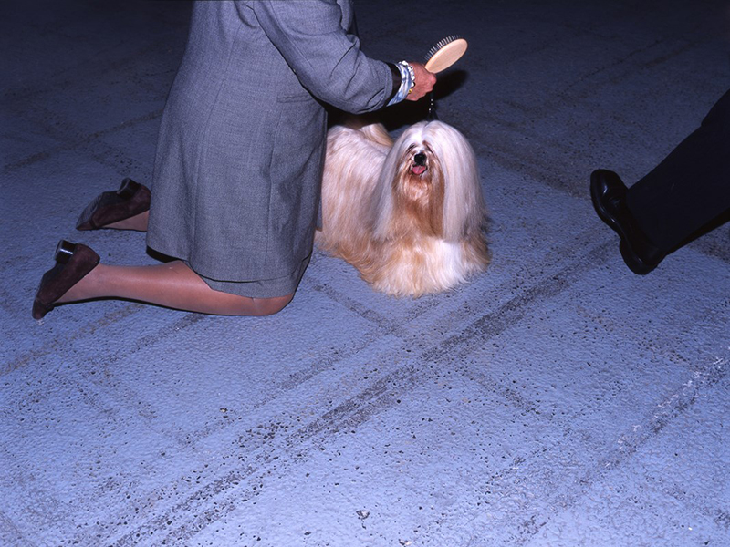 Dog Shows by Martin Masai Andersen